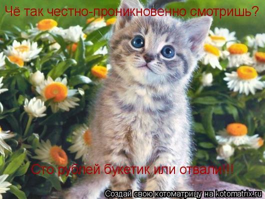 Котоматрица: Чё так честно-проникновенно смотришь?       Сто рублей букетик или отвали!!!