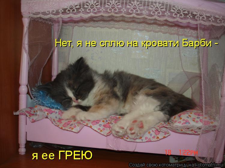 Котоматрица: Нет, я не сплю на кровати Барби -  я ее ГРЕЮ