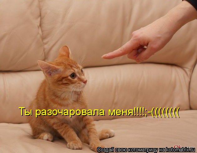 Котоматрица: Ты разочаровала меня!!!!;-((((((((