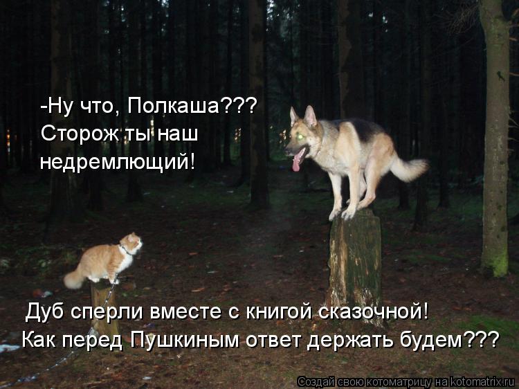 Котоматрица: -Ну что, Полкаша??? Сторож ты наш  недремлющий! Дуб сперли вместе с книгой сказочной! Как перед Пушкиным ответ держать будем???