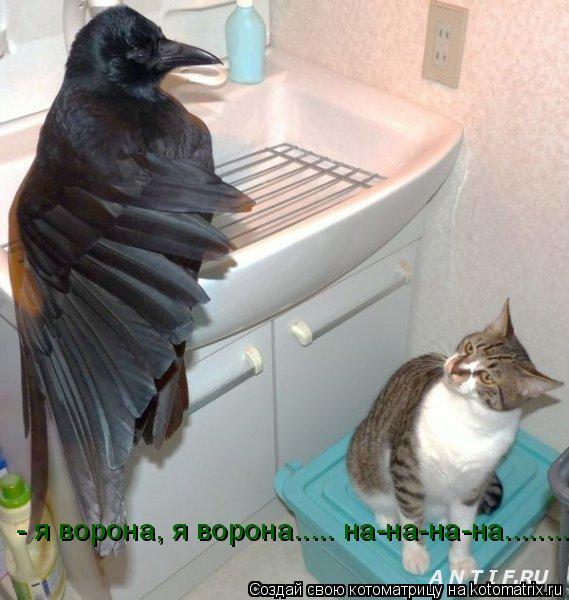 Котоматрица: - я ворона, я ворона..... на-на-на-на........