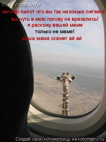 Котоматрица: мистер пилот что вы так низонько летаете? вы чуть в мою голову не врезались! я раскожу вашей маме только не маме! ваша мама скажет ай ай