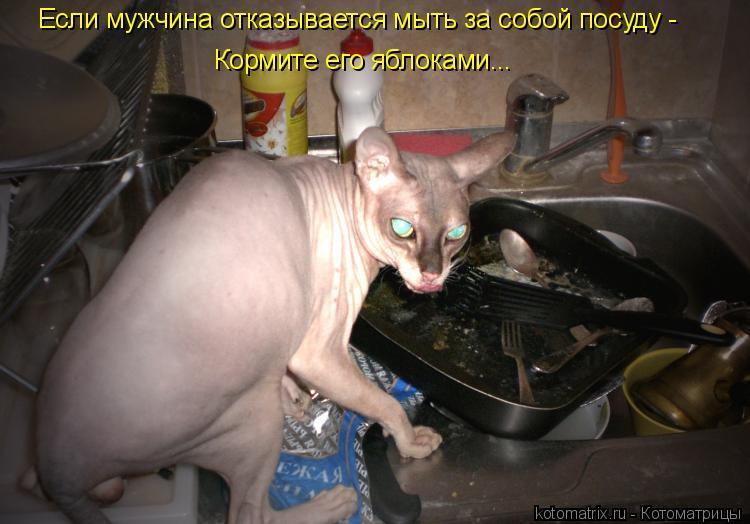 Котоматрица: Если мужчина отказывается мыть за собой посуду - Кормите его яблоками...