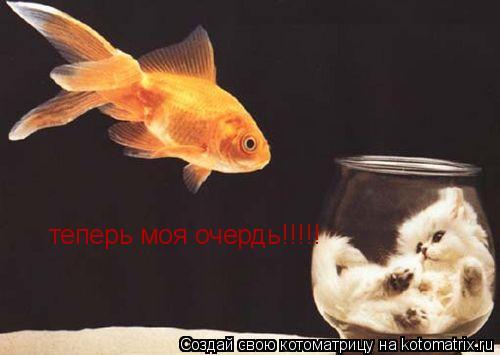 Котоматрица: теперь моя очердь!!!!!