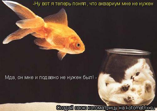Котоматрица: -Ну вот я теперь понял, что аквариум мне не нужен Мда, он мне и подавно не нужен был! -