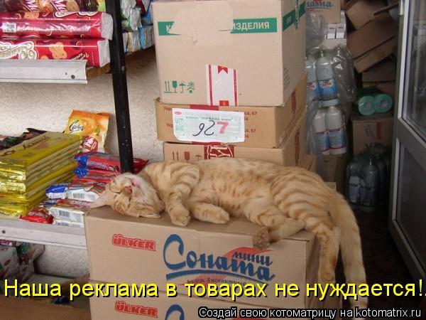 Котоматрица: Наша реклама в товарах не нуждается!..
