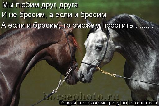Котоматрица: Мы любим друг, друга И не бросим, а если и бросим А если и бросим, то сможем простить.................