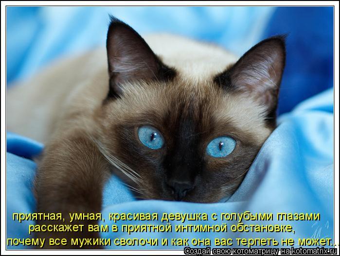 Котоматрица: приятная, умная, красивая девушка с голубыми глазами расскажет вам в приятной интимной обстановке, почему все мужики сволочи и как она вас