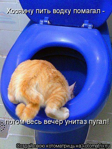 Котоматрица: Хозяину пить водку помагал - потом весь вечер унитаз пугал!