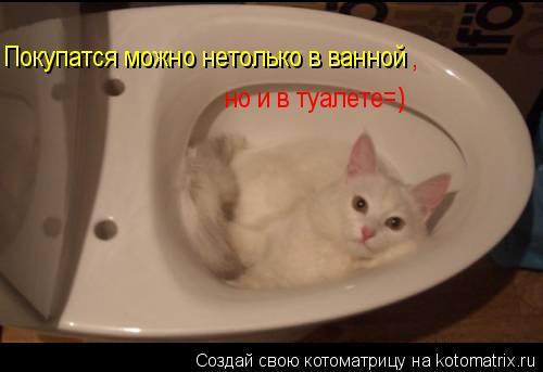 Котоматрица: Покупатся можно нетолько в ванной , но и в туалете=)