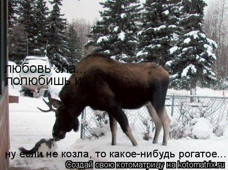 Котоматрица: любовь зла...  полюбишь и ... ну если не козла, то какое-нибудь рогатое...