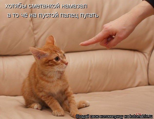 Котоматрица: хотябы сметанкой намазал а то чё на пустой палец пугать