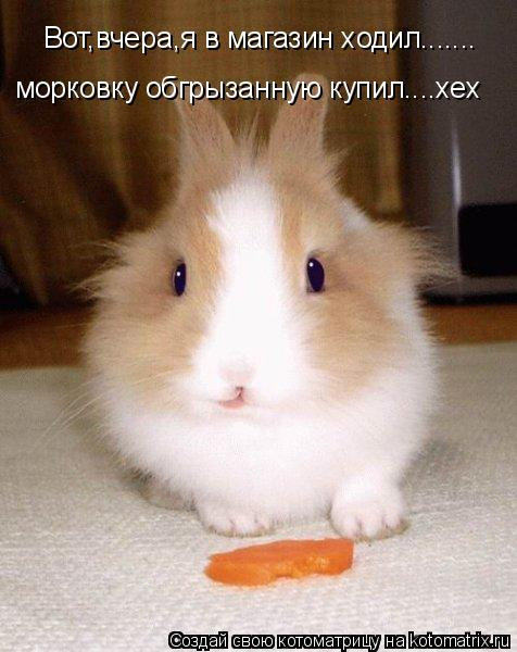 Котоматрица: Вот,вчера,я в магазин ходил....... морковку обгрызанную купил....хех