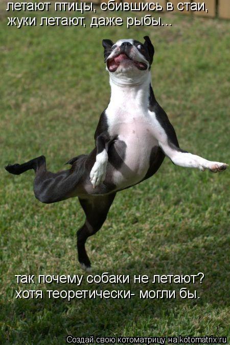 Котоматрица: летают птицы, сбившись в стаи, жуки летают, даже рыбы... так почему собаки не летают? хотя теоретически- могли бы.