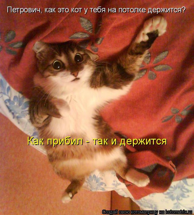 Котоматрица: Петрович, как это кот у тебя на потолке держится? Как прибил - так и держится