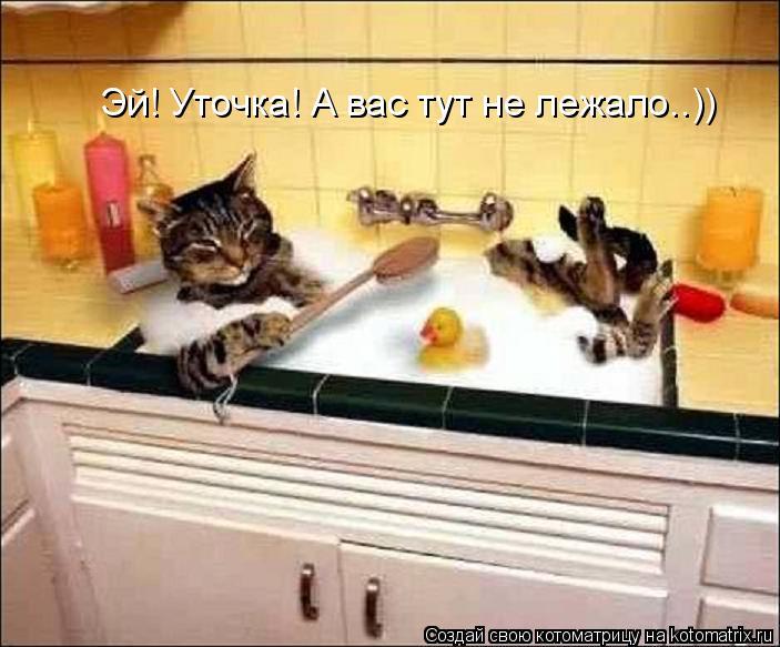 Котоматрица: Эй! Уточка! А вас тут не лежало..))