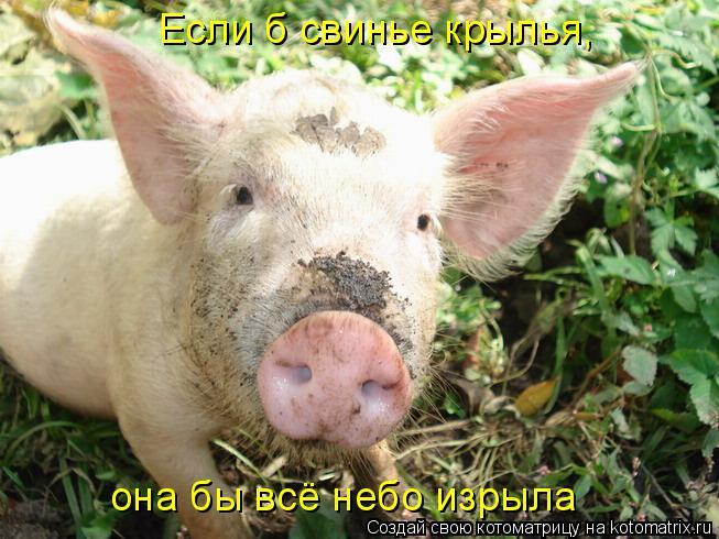 Котоматрица: Если б свинье крылья,  она бы всё небо изрыла
