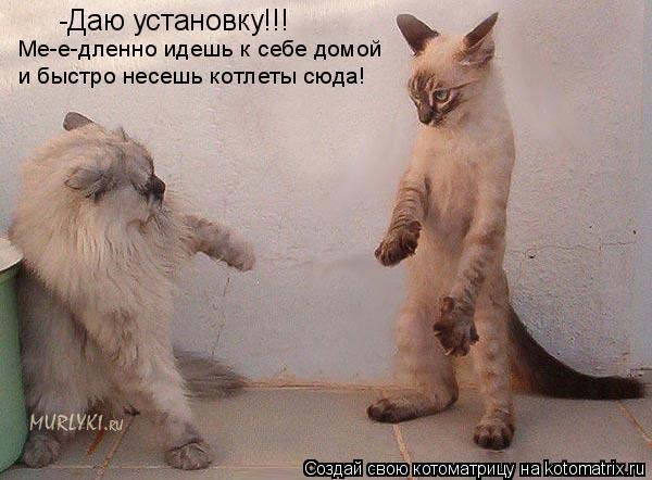 Котоматрица: -Даю установку!!! Ме-е-дленно идешь к себе домой  и быстро несешь котлеты сюда!