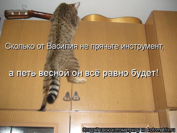 Котоматрица: Сколько от Василия не прячьте инструмент, а петь весной он всё равно будет!