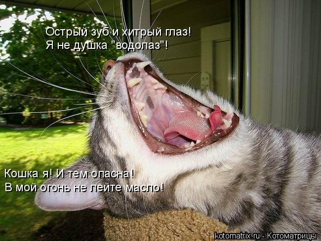 """Котоматрица: Острый зуб и хитрый глаз!  Я не душка """"водолаз""""! Кошка я! И тем опасна! В мой огонь не лейте масло!"""