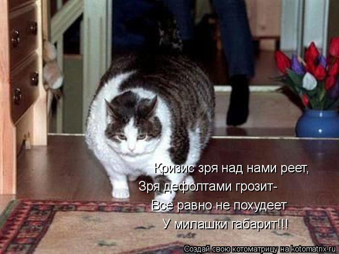 Котоматрица: Кризис зря над нами реет,  Зря дефолтами грозит-  Всё равно не похудеет  У милашки габарит!!!