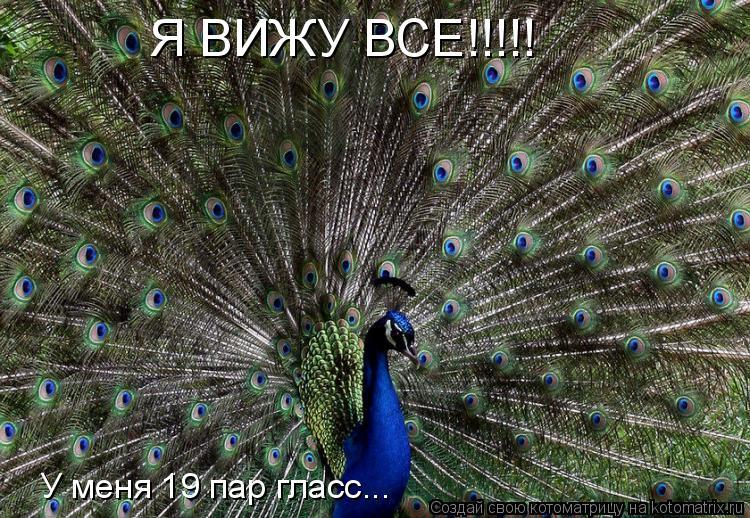 Котоматрица: Я ВИЖУ ВСЕ!!!!! У меня 19 пар гласс...