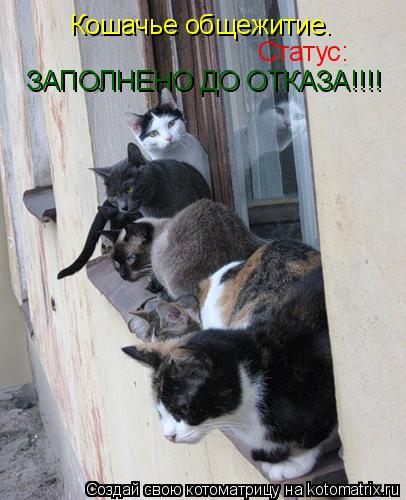 Котоматрица: Кошачье общежитие. Статус: ЗАПОЛНЕНО ДО ОТКАЗА!!!!