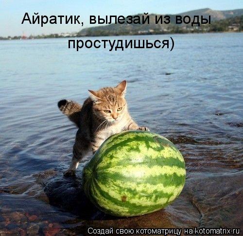 Котоматрица: Айратик, вылезай из воды простудишься)