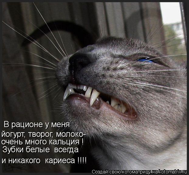Котоматрица: В рационе у меня йогурт, творог, молоко- очень много кальция ! и никакого  кариеса !!!! Зубки белые  всегда