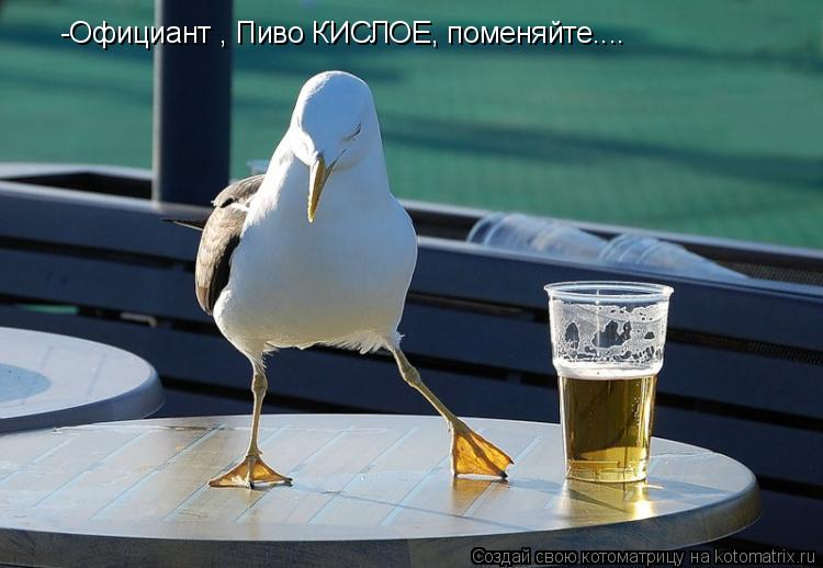 Котоматрица: -Официант , Пиво КИСЛОЕ, поменяйте....