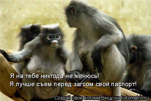 Котоматрица: Я на тебе никгода не женюсь! Я лучше съем перед загсом свой паспорт!