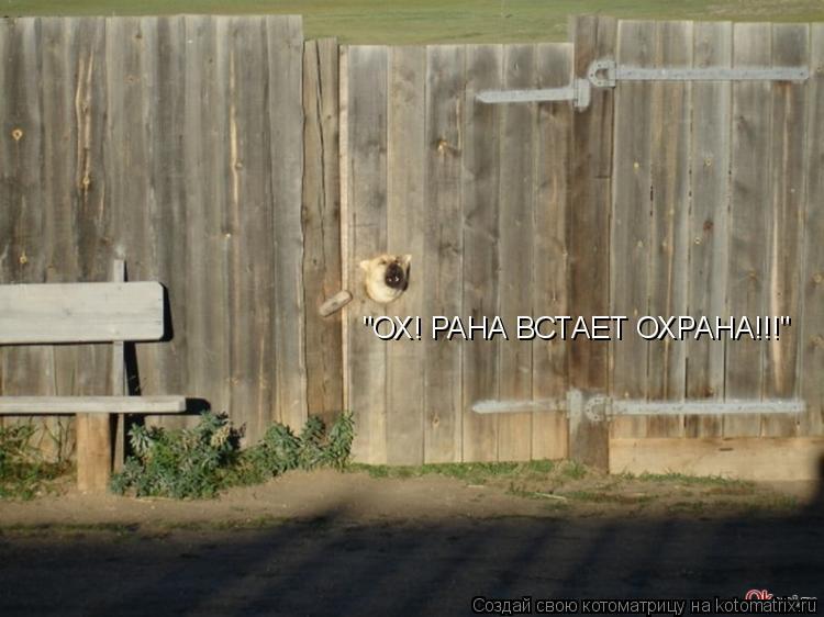 """Котоматрица: """"ОХ! РАНА ВСТАЕТ ОХРАНА!!!"""""""
