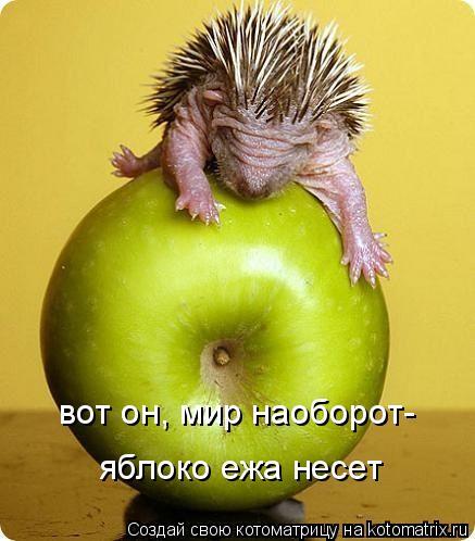 Котоматрица: вот он, мир наоборот- яблоко ежа несет