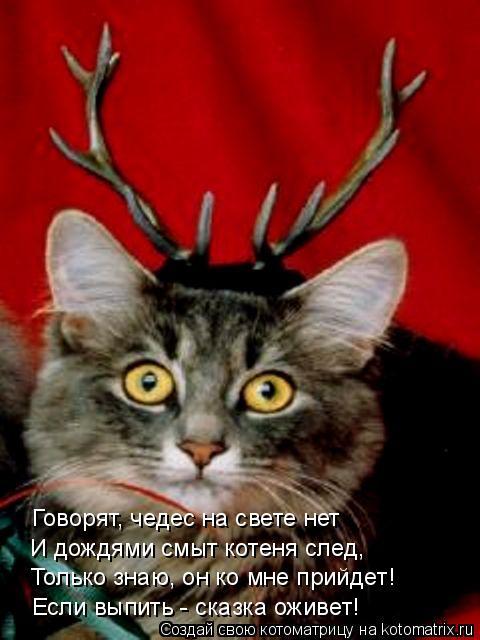 Котоматрица: Говорят, чедес на свете нет И дождями смыт котеня след, Только знаю, он ко мне прийдет! Если выпить - сказка оживет!