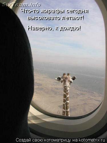 Котоматрица: Что-то жирафы сегодня  высоковато летают! Наверно, к дождю!