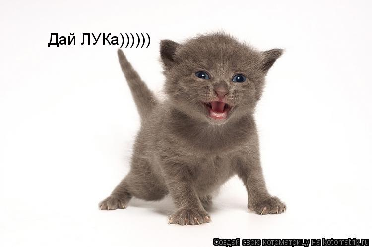 Котоматрица: Дай ЛУКа))))))