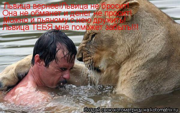Котоматрица: Львица вернее!Львица не бросит! Она не обманет и денег не просит! Можно и пьяному с нею дружить! Львица ТЕБЯ мне поможет забыть!!!