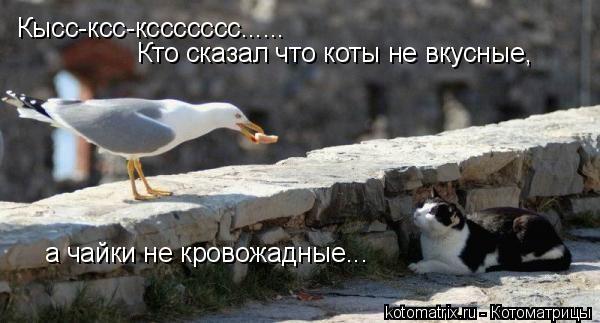 Котоматрица: Кысс-ксс-кссссссс...... Кто сказал что коты не вкусные, а чайки не кровожадные...