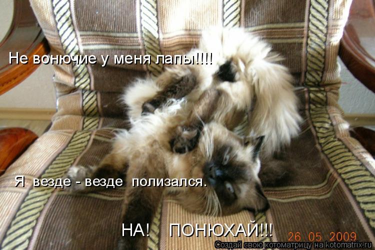 Котоматрица: Не вонючие у меня лапы!!!! Я  везде - везде  полизался. НА!    ПОНЮХАЙ!!!