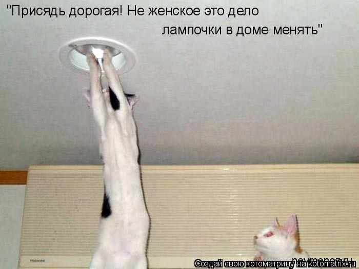 """Котоматрица: """"Присядь дорогая! Не женское это дело лампочки в доме менять"""" """"Присядь дорогая! Не женское это дело  лампочки в доме менять"""""""