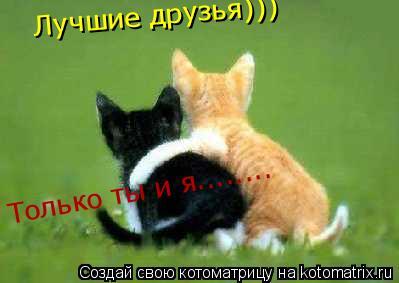 Котоматрица: Лучшие друзья))) Лучшие друзья))) Только ты и я........