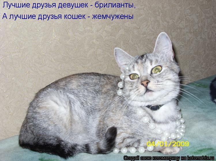 Котоматрица: Лучшие друзья девушек - брилианты, А лучшие друзья кошек - жемчужены