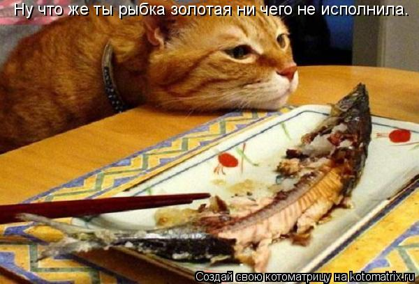 Котоматрица: Ну что же ты рыбка золотая ни чего не исполнила.