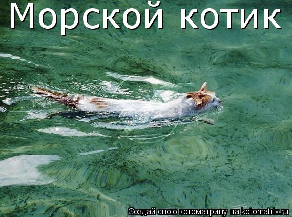 Котоматрица: Морской котик