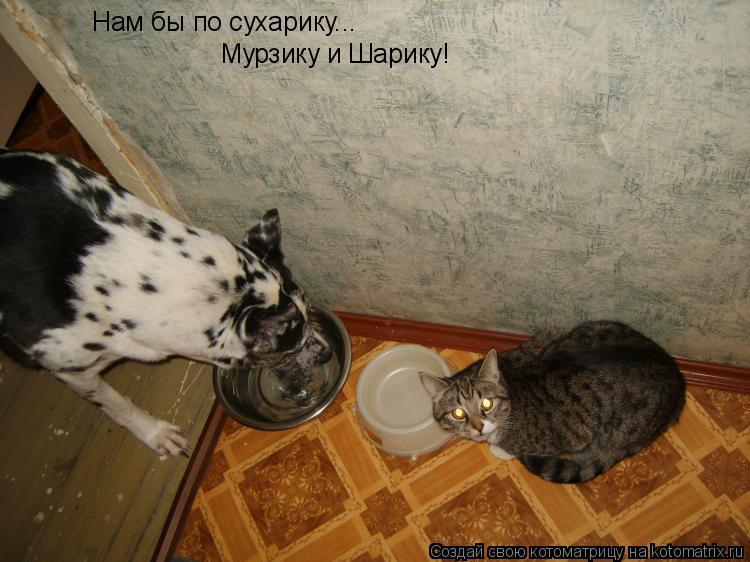 Котоматрица: Нам бы по сухарику... Мурзику и Шарику!