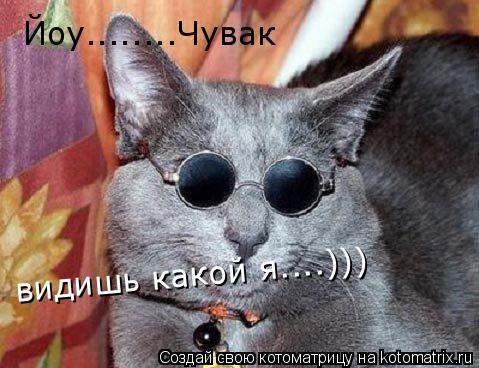 Котоматрица: Йоу........Чувак видишь какой я....)))