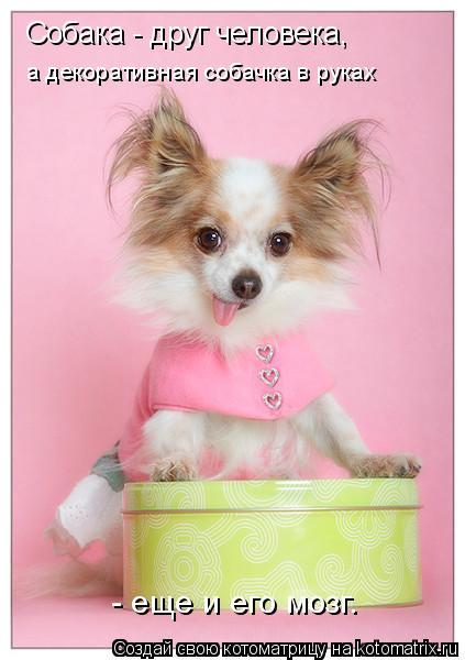Котоматрица: Собака - друг человека, а декоративная собачка в руках  - еще и его мозг.