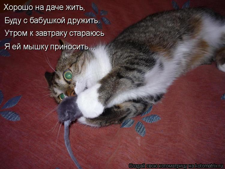 Котоматрица: Буду с бабушкой дружить.  Утром к завтраку стараюсь Хорошо на даче жить, Я ей мышку приносить...