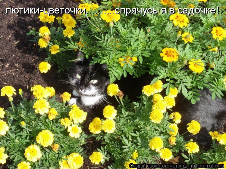 Котоматрица: лютики-цветочки..........спрячусь я в садочке!