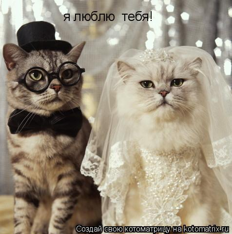 Котоматрица: я люблю  тебя!